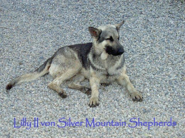 06-29-06 PUPPY-DOG MIX 073