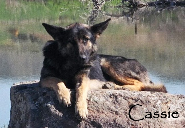 Cassie Sunbathing 2