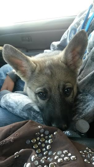 sadie puppy keep