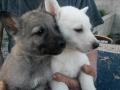 puppys-sold