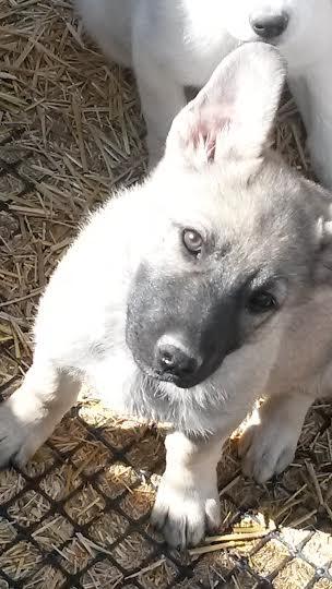zena 11 puppies
